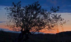Zakat-v-avstralijskom-bushe
